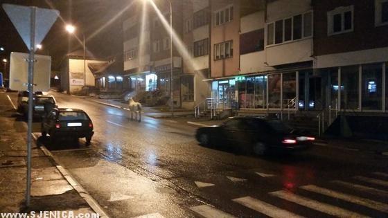Konj u čarsiji - Sjenica 07.12.2014