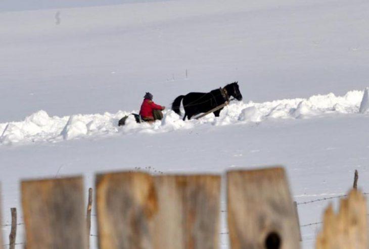 sjenica - konj u snegu pesterska visoravan foto zoran saponjic www.sjenica.com.jpg